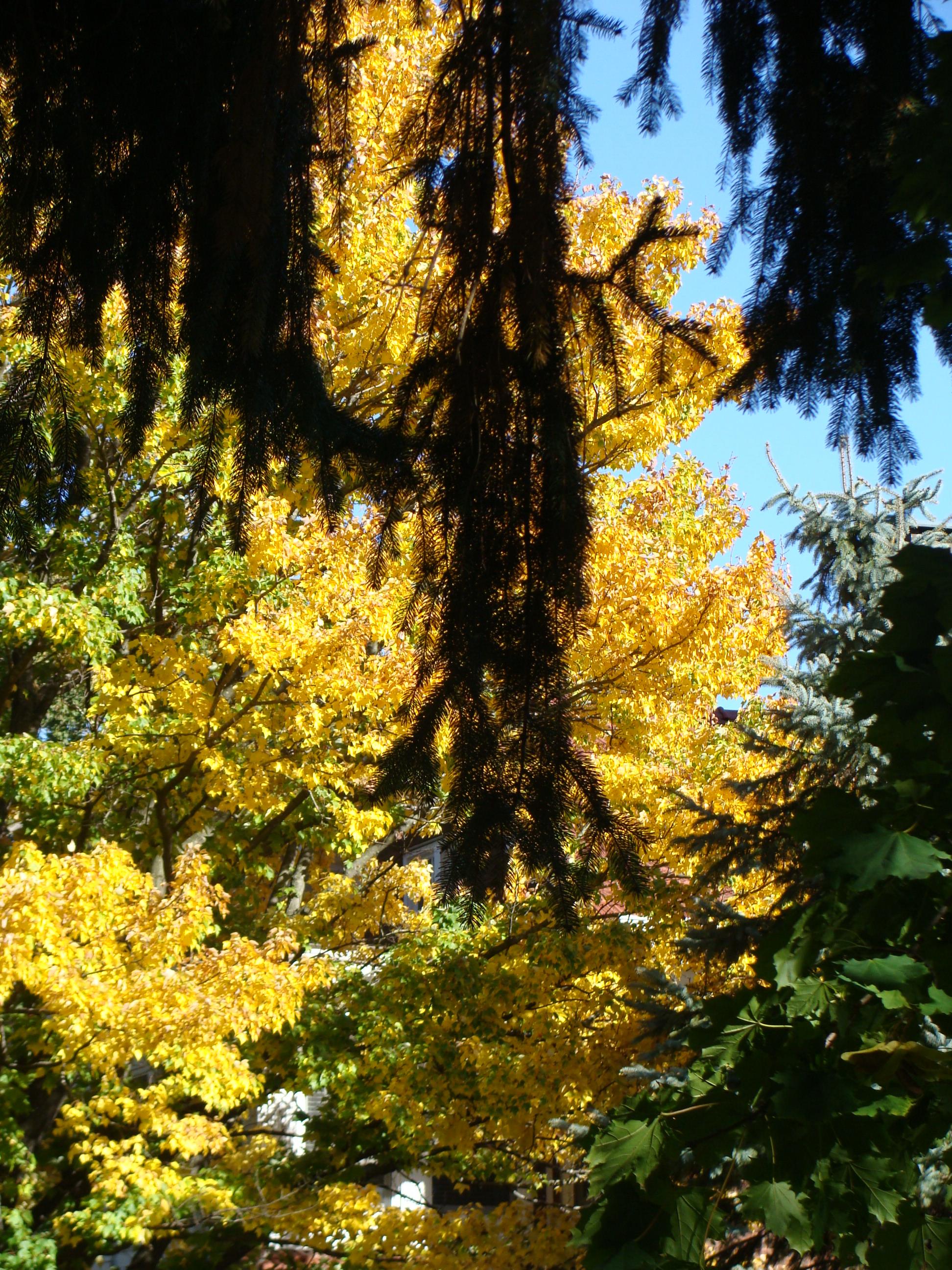 autumn Peoria 020